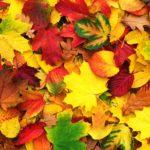 Творческий мастер-класс «Осенняя картина»